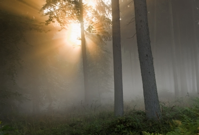 Morning Light by Dan