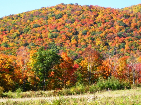 Fall foliage in the mtns